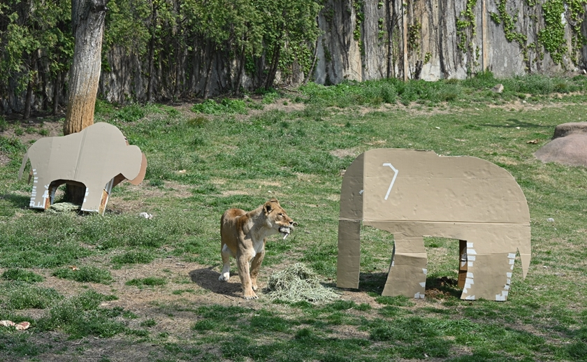 LG전자가 가전제품의 포장재를 재활용해 동물들이 보다 건강하게 생활할 수 있도록 도와주는 사회공헌활동을 펼친다. 사진은 서울대공원에 있는 동물들이 LG전자 가전제품의 포장 박스로 만든 놀이도구를 가지고 놀고 있는 모습.
