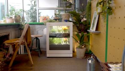[일단클릭] 새로운 라이프스타일을 틔우다, 식물생활가전 LG tiiun 체험존 탐방기
