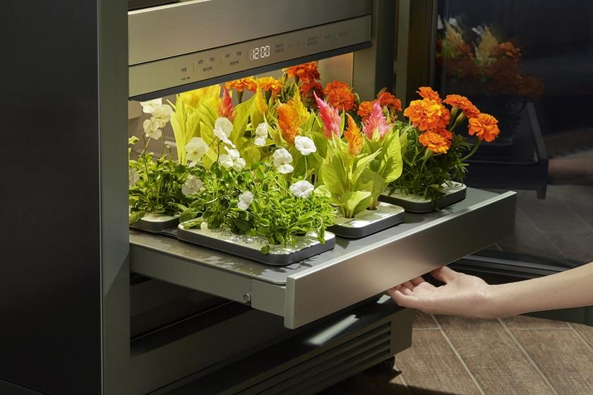 LG전자가 14일 출시한 신개념 식물생활가전 'LG 틔운(LG tiiun)'에서 수확한 꽃