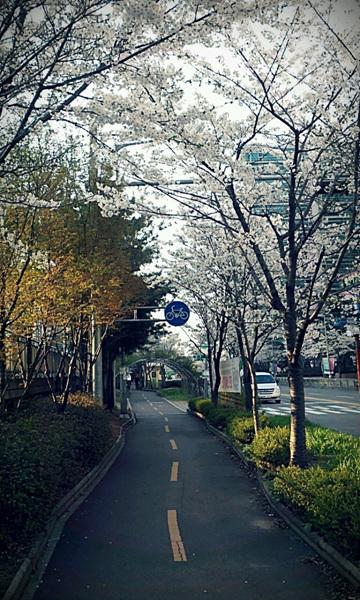자전거 전용 도로 사진