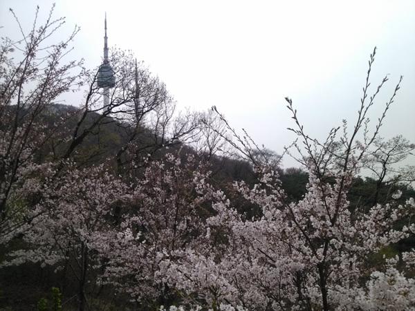 벚꽃 사진1