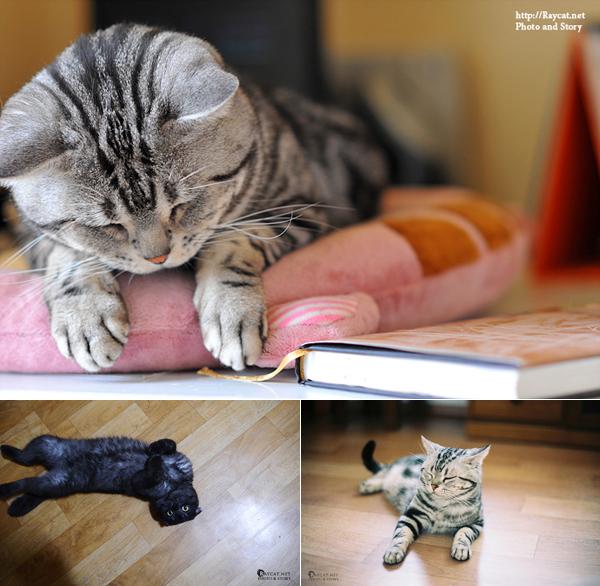 고양이 사진2