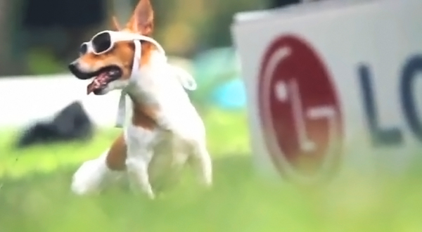 3D 안경을 낀 강아지 사진