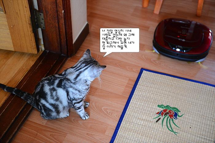 고양이, 로봇 청소기 로보킹 듀얼아이 2.0 사진