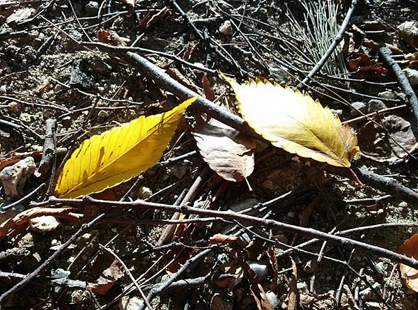 옵티머스 G로 촬영한 낙엽