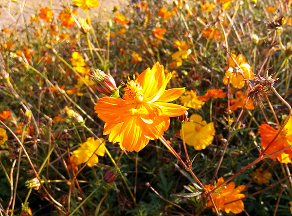 옵티머스 G로 촬영한 꽃
