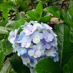리더유 자카르타 꽃