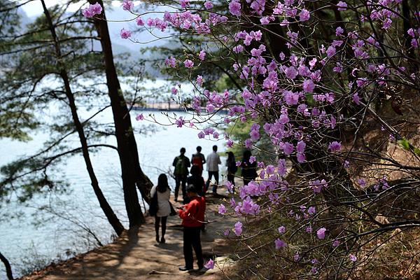 산정호수 꽃 풍경