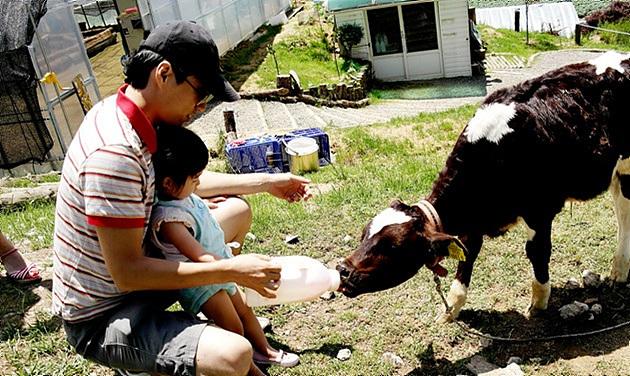 대관령 아기동물농장