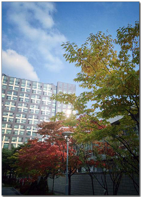 MC연구소 최선욱님이 옵티머스 뷰2로 촬영한 가산디지털센터의 가로수길 풍경이다. 파란하늘과 노란 나무가 인상적이다.