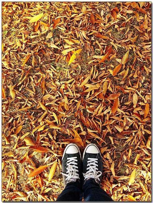 MC생산기술팀 여민수 과장이 LG G2로 촬영한 바닥에 떨어진 낙엽들과 본인의 발 모습이다
