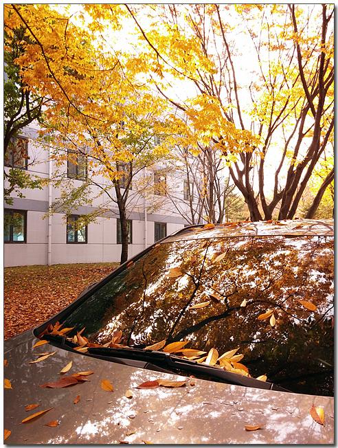 MC생산기술팀 여민수 과장이 LG G2로 촬영한 자동차와 노란 단풍의 모습이다