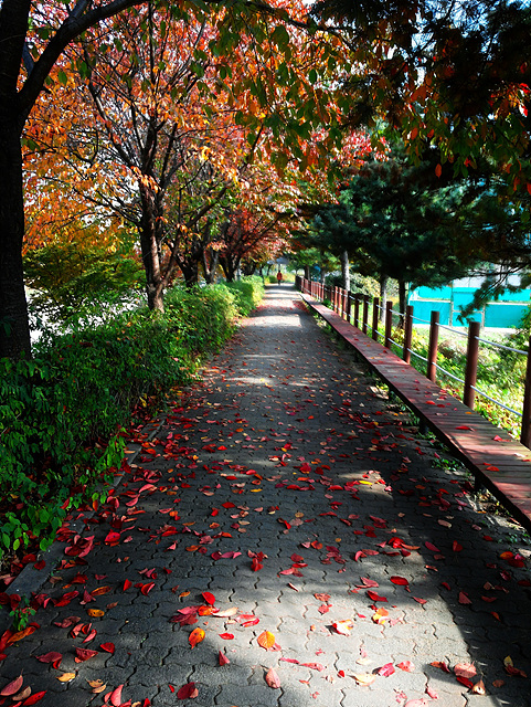 전자기술원 소재부품연구소 신정철 책임이 옵티머스 G Pro로 촬영한 우면 R&D 센터 가을로 가는 길 풍경이다. 붉은색과 초록색으로 어우러진 가을길이 아름답다