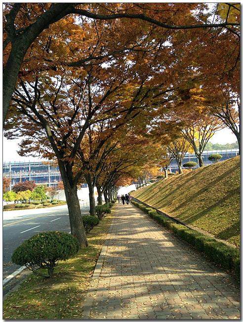 TV SW개발품질보증팀 최진혁님이 촬영한 평택러닝센터의 단풍으로 물든 즐거운 퇴근길 이다