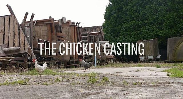 더 치킨 캐스팅 대상이 되었던 닭들이 마당을 걷고 있다.