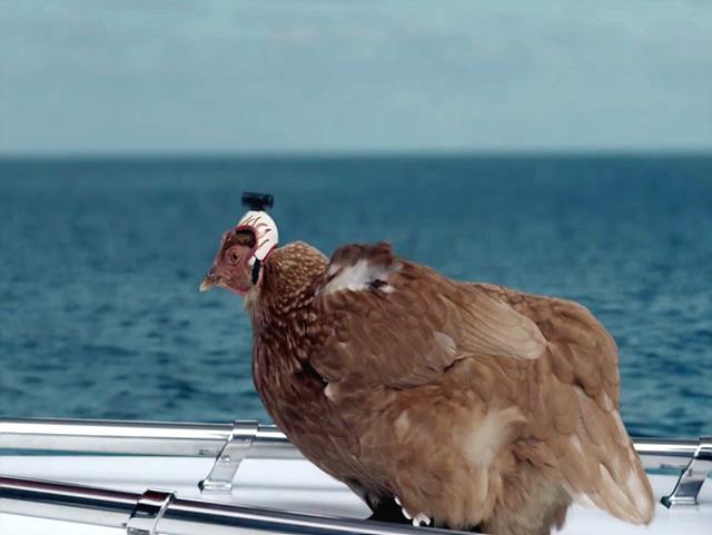 바다 위에 배를 타고 가는 주인고 리지(Lizzy)의 모습