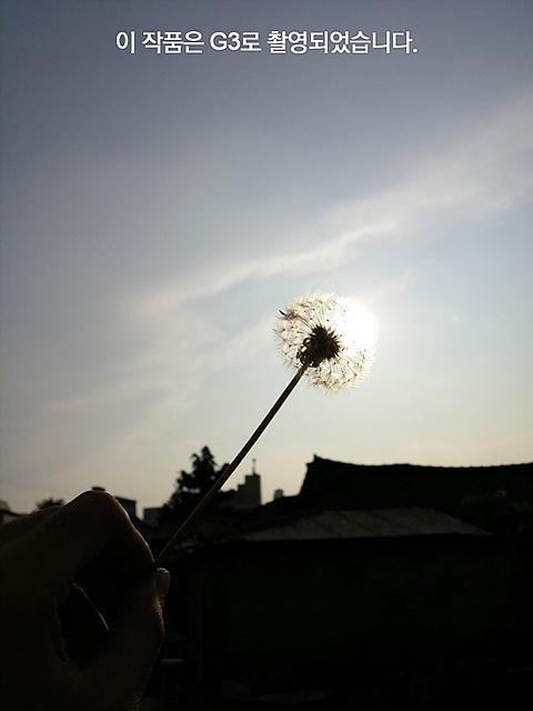 민들레씨로 태양을 가린 모습.