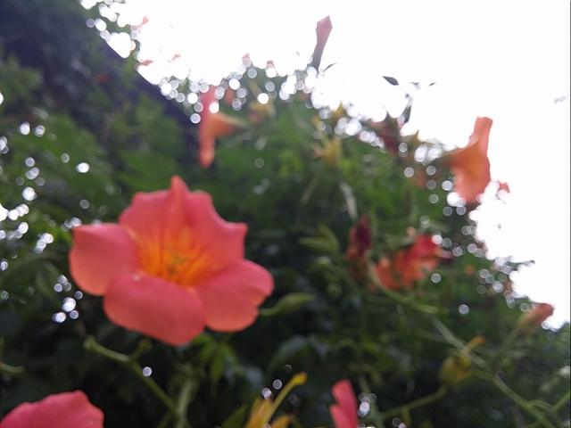 꽃과 함께 나뭇잎 사이로 보이는 하늘. 포커스가 맞지 않아 동글동글한 빛망울이 보인다.