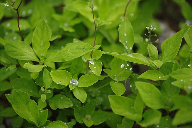 푸른 잎사귀 위로 이슬이 맺혀 있다.
