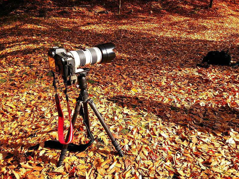 카메라가 삼각대 위에 놓여져 있다. 바닥이 보이지 않을 정도로 낙엽이 수북하게 깔려있다.
