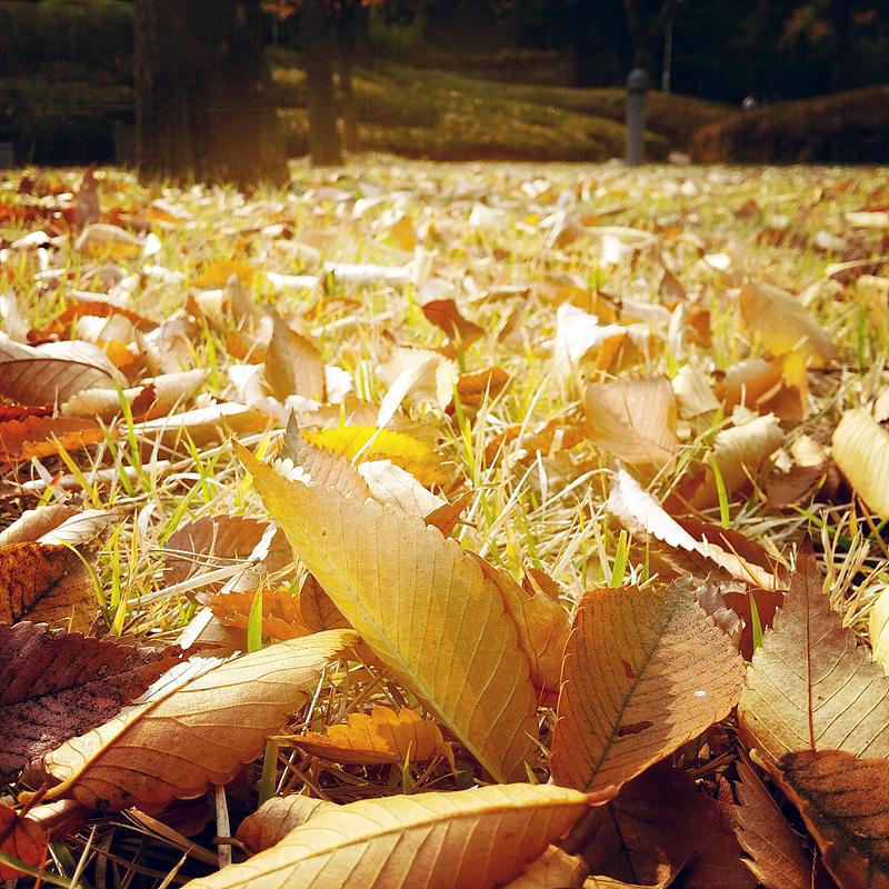 잔디밭 위에 수북히 쌓인 낙엽