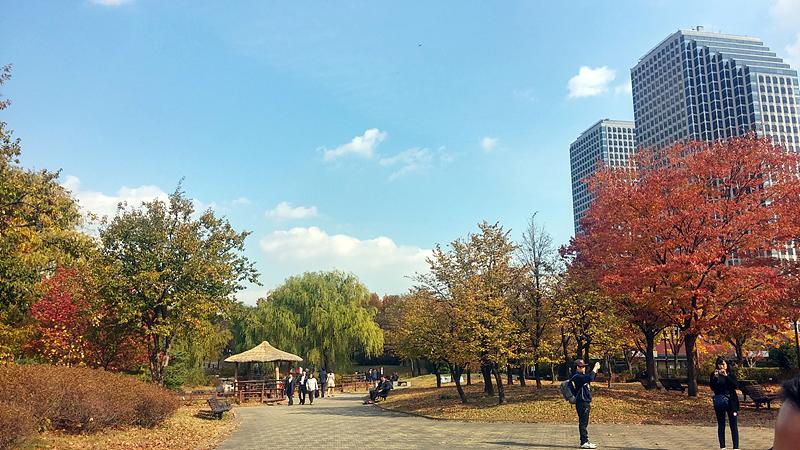 붉게 물든 나무들 사이로 푸른 하늘과 LG 트윈타워가 보인다