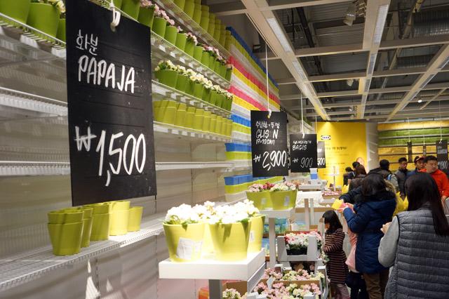 이케아(IKEA)에서 판매하는 화분의 모습과 쇼룸을 둘러보는 사람들. '화분 PAPAJA'는 1,500원에 판매되고 있다.