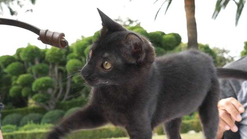 훌륭한 연기를 보여준 아기고양이의 모습