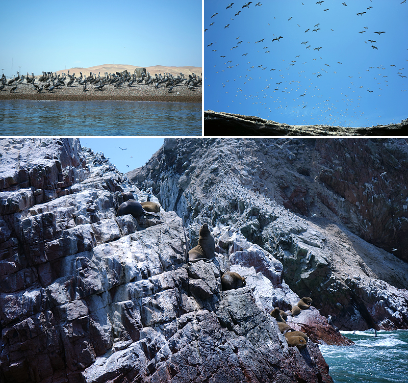 물가에 모여있는 새들(좌상단), 하늘을 가득 채운 새들(우상단), 휴식을 취하고 있는 바다사자(하단)