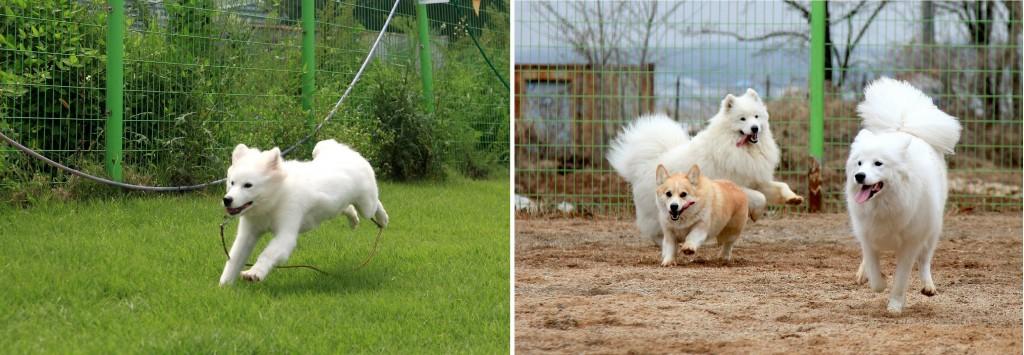 반려견들은 충분한 운동이 필요하다. 들판을 뛰어다니고 있는 강아지의 모습