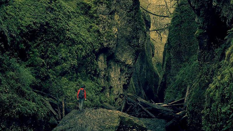 포틀랜드 근교 오네온타 고지에서 촬영한 사진. 어두운 숲의 모습