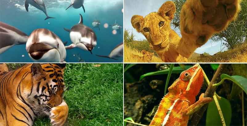왼쪽 위에서부터 시계방향으로 돌고래, 아기사자, 도마뱀, 호랑이의 모습