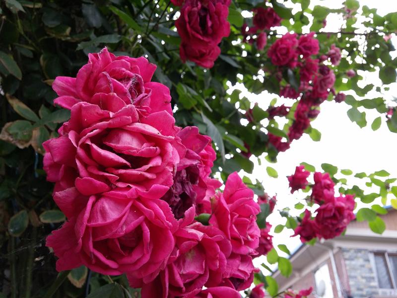 빨갛게 핀 꽃의 사진을 카메라로 담았다.