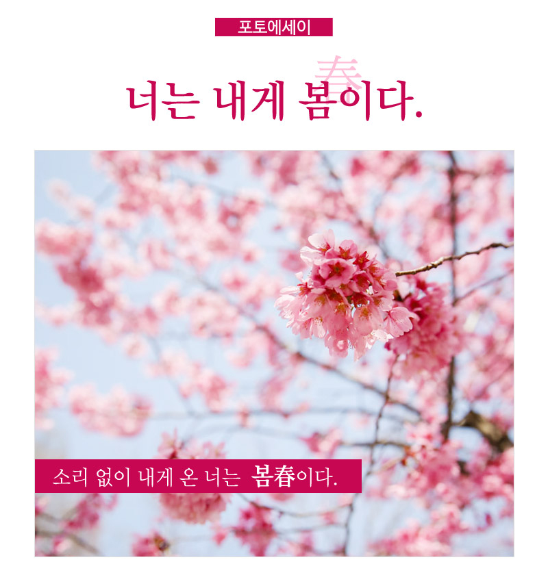 포토에세이. 너는 내게 봄이다. - 소리 없이 내게 온 너는 봄春이다. : 나무에 활짝 피어난 분홍색 꽃