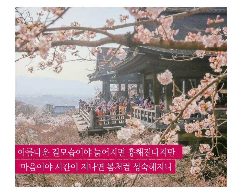 아름다운 겉모습이야 늙어지면 흉해진다지만 마음이야 시간이 지나면 봄처럼 성숙해지니 - 분홍색 벚꽃이 활짝 핀 곳에 사람들이 보인다.