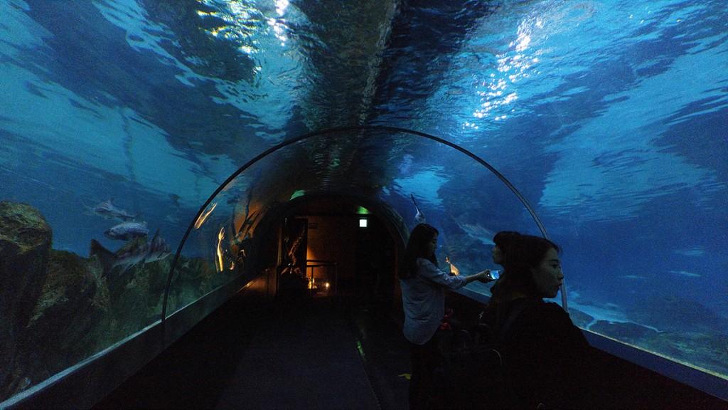 코엑스 아쿠아리움에서 찍은 해저터널