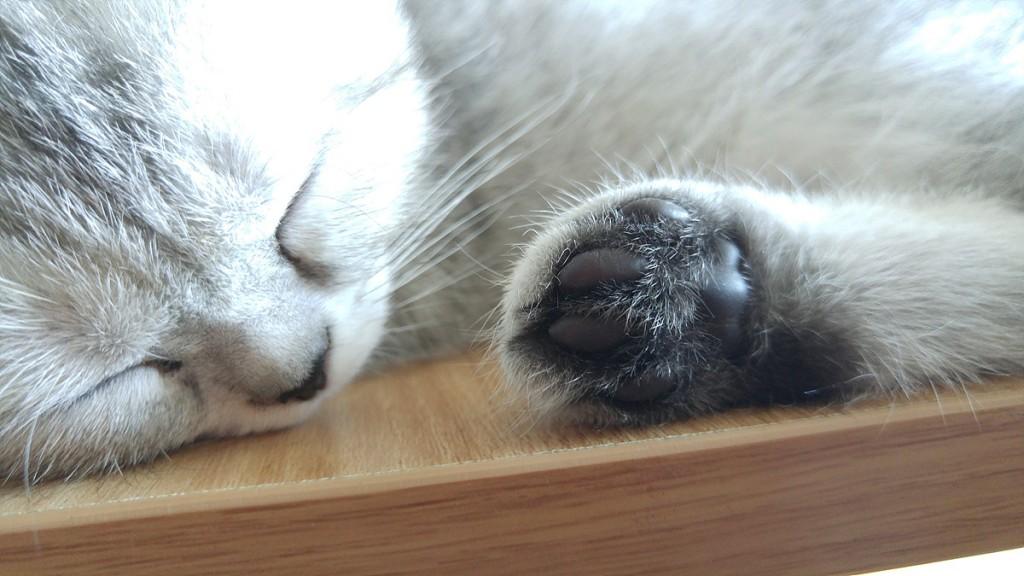 자고 있는 고양이