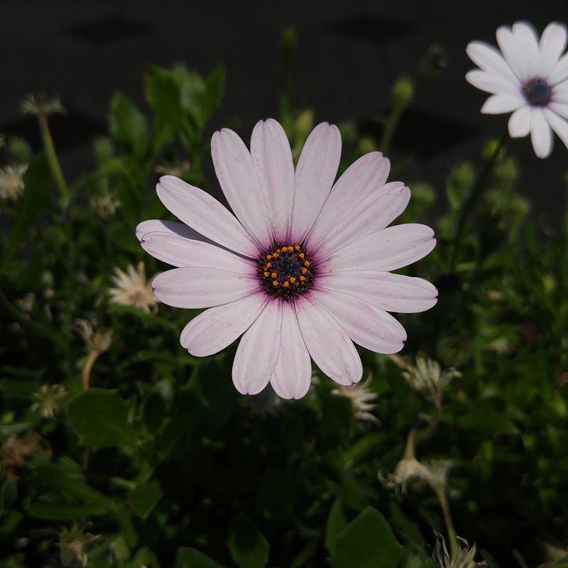 G4로 찍은 꽃 사진