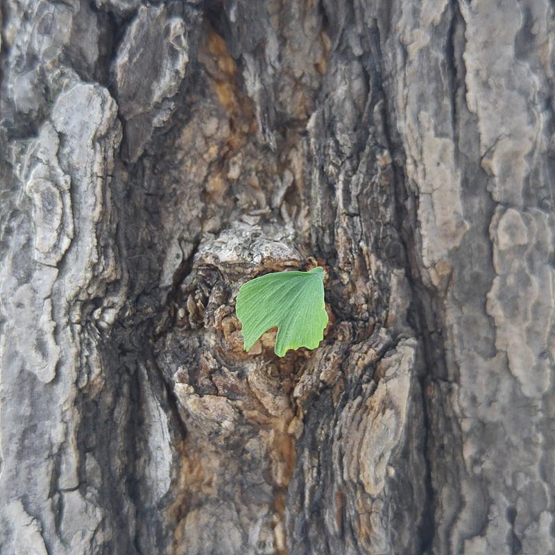 G4로 찍은 나무 사진