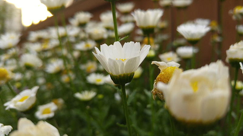 G4로 촬영한 꽃 사진