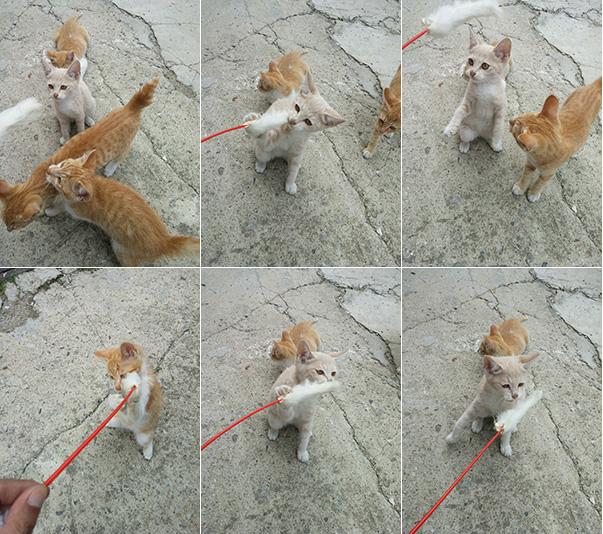 장난치는 고양이들의 모습이 다양한 구도로 연속 촬영된 모습