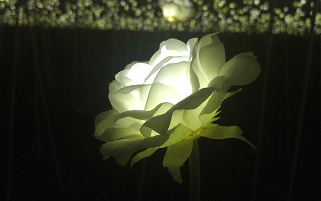 비주얼 챌린저 촬영 야간 조명 꽃