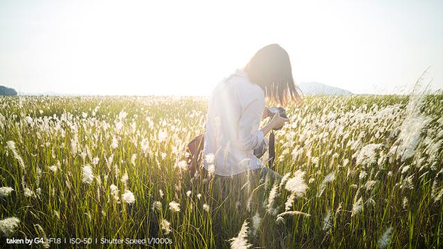 LG 모바일 사진대전 우수작 갈대밭