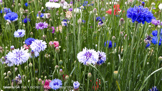 LG 모바일 사진대전 우수작 파란꽃