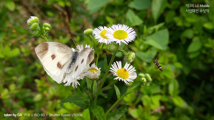 LG 모바일 사진대전 입선 꽃과 나비 접사