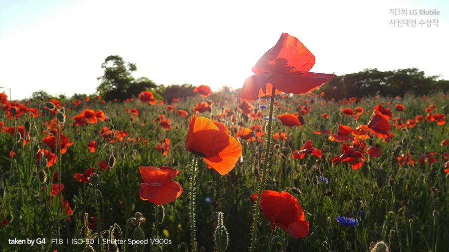 LG 모바일 사진대전 2위 수상작 양귀비꽃