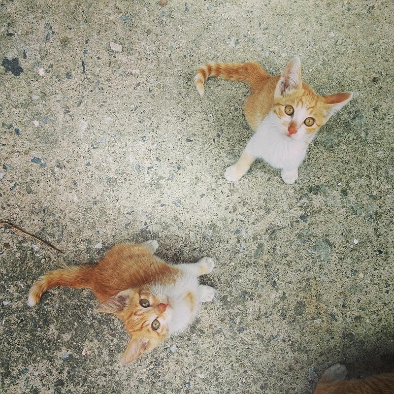 아기 고양이 두 마리