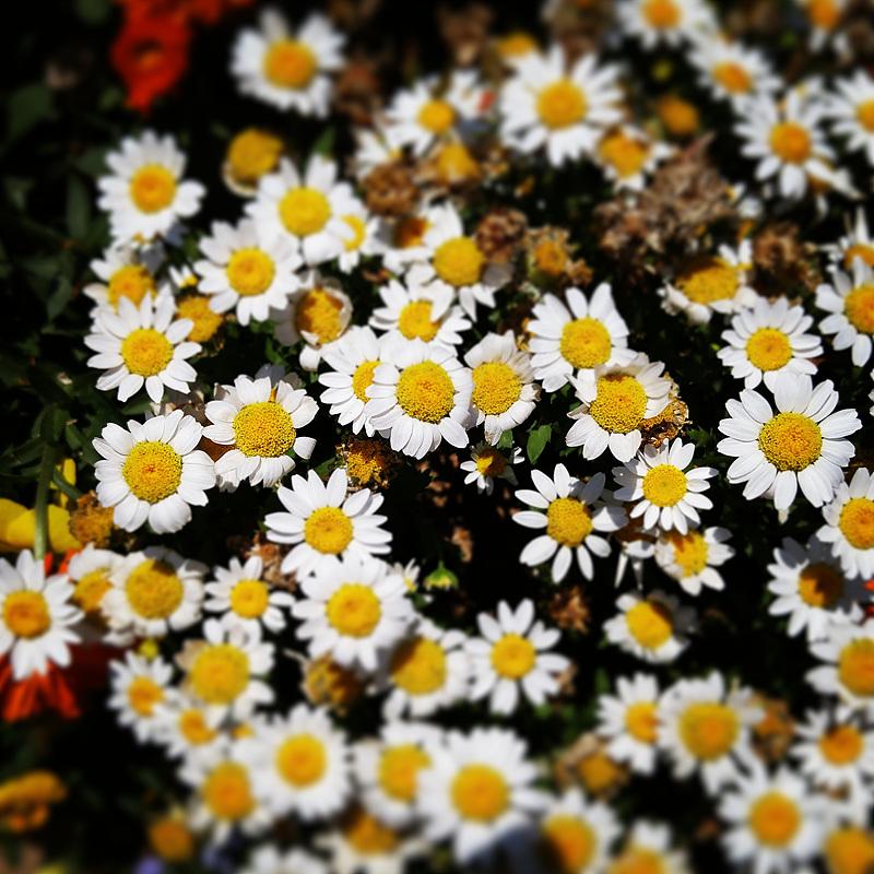 들꽃 사진