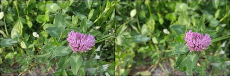 배경에 초점이 맞은 사진, 꽃에 초점이 맞은 사진