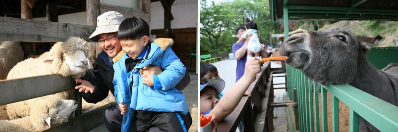 아이들이 동물에게 먹이를 주는 모습